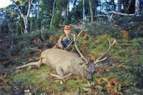 Errol Mason - Sambar Deer Success Story