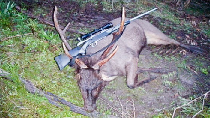 Brett Massingham - Sambar Deer Success Story