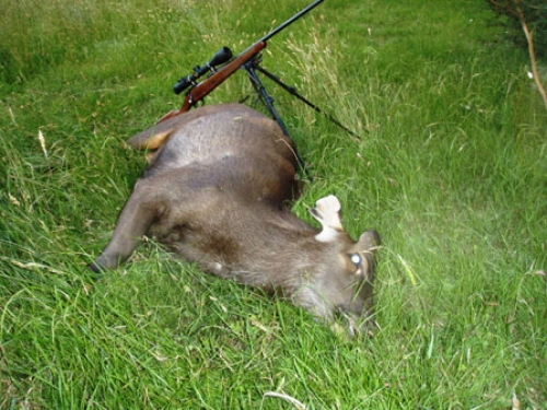 Geoff McClure - Sambar Deer Success Story