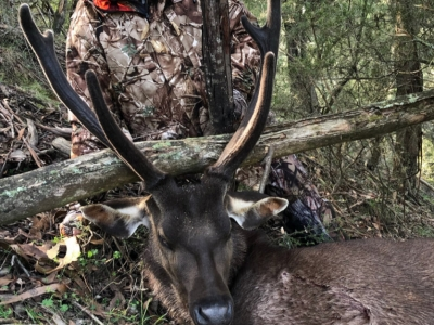 Jeff Martin - Sambar Deer Success Story