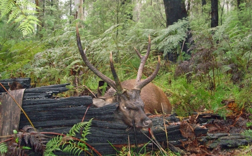 Brian Church - Sambar Deer Success Story