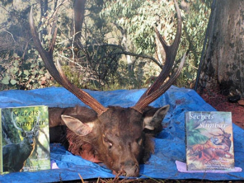 Bob Shepherd & Peter Russell - Sambar Deer Success Story