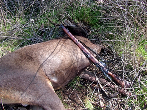 Paul Williams - Sambar Deer Success Story